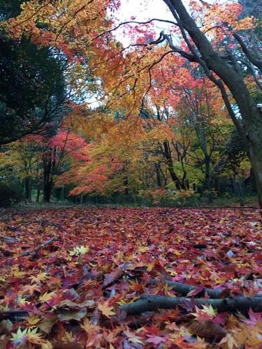 写真 2014-11-30 15 49 34.jpg